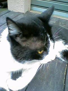 西荻猫 ミーちゃん 2