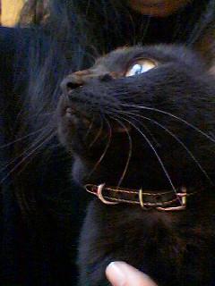 ウチの黒猫