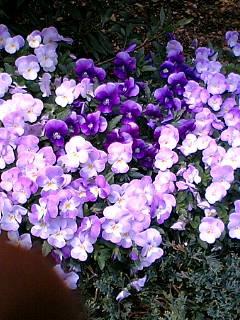 ビル街の花たち