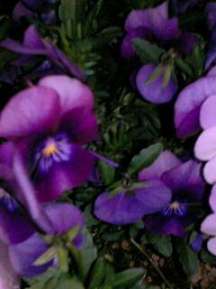 夜の花壇にて