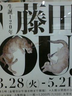 ポスターの中の猫