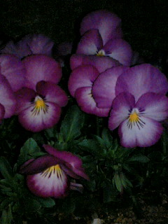 エントランス花壇の花たち