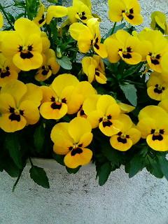 黄色の花も咲いているのに