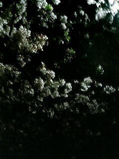 雨上がりの夜