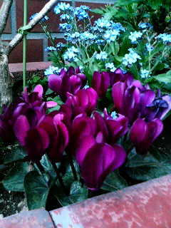 入谷の町角に咲く花たち
