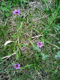 豊橋へ向かう浜名湖インターの小さな花たち