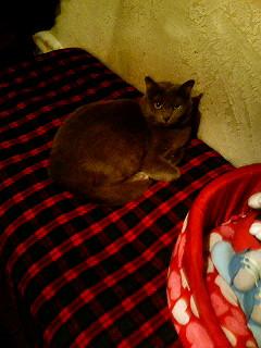 豊橋 カレー屋ラジャの猫