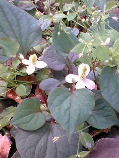 久しぶりに日比谷公園の花