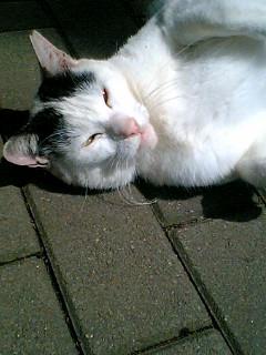 久しぶりに日比谷公園の猫たち