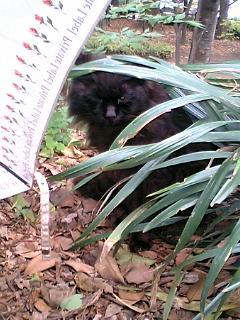 久しぶりに日比谷公園の猫たち 2