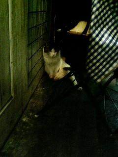 有楽町の野良猫