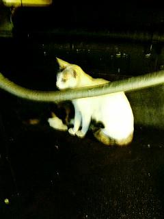 有楽町の野良猫 2 親子