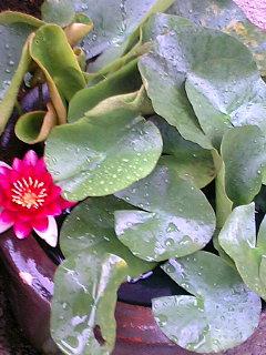 近所の植物