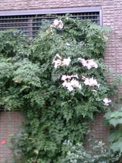去年撮っていたシリーズ  通りの花
