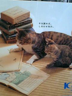 ポスターの中の猫 2