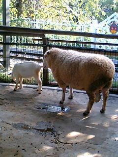 あらかわ遊園 羊・山羊・鹿