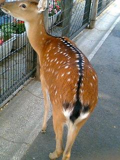 あらかわ遊園 バンビ