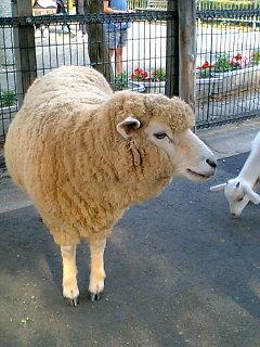 あらかわ遊園・山羊