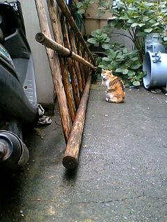 近所の猫 駅前の猫