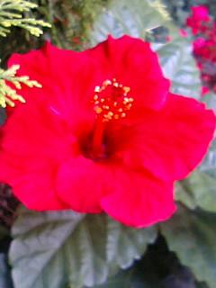 去年撮っていたシリーズ  赤い花