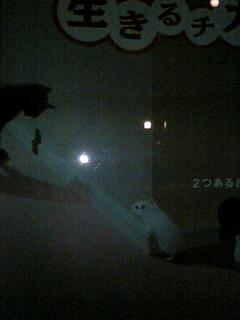 ポスターの中の猫 6