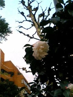 冬至・銀杏・椿・柚