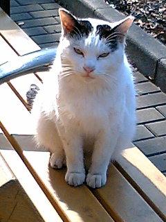 昼休みに日比谷公園で猫に会った 2