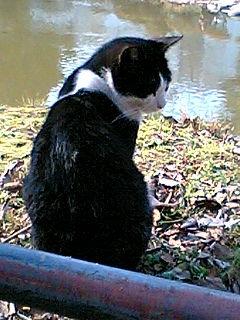 昼休みに日比谷公園で猫に会った 4
