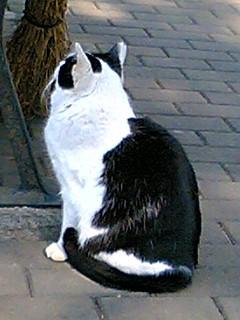 昼休みに日比谷公園で猫に会った 3