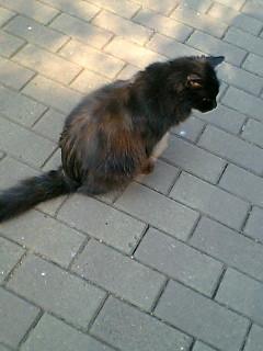 昼休みに日比谷公園で猫に会った