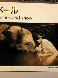 行きたい写真展「animal totems」