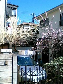 春は足踏み