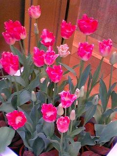 身の回りの花