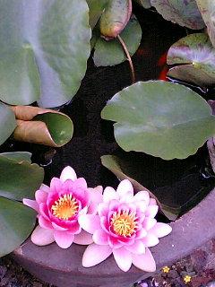 身の回りの植物