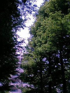 ビルの谷間の緑