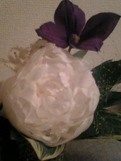 猫・白と紫・SOL