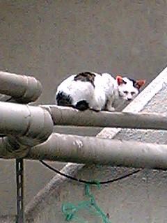 港みらい・野良猫・鳥尾さん