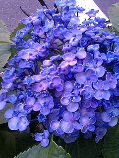 グレーと紫・池袋猫