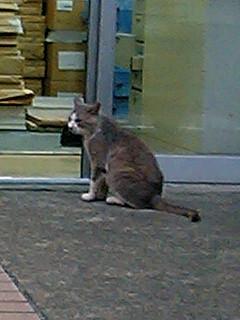 足ながひまわり・気なが猫