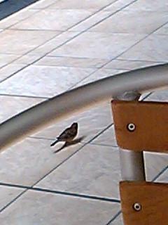 雀の友だち