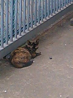 仲間思いな猫