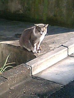 大晦日に、師走の新宿・日なたのボス猫