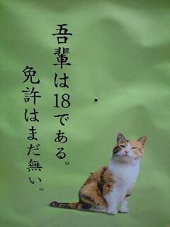 ポスターの中の猫 8