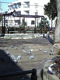 節分と立春と鳩