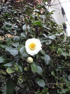"""2/27(水)""""Shoomy session""""LIVE@国分寺サンジェルマン8世"""
