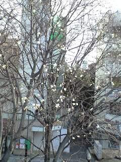 """3/19(水)""""Shoomy Bossa"""" nova LIVE@国分寺サンジェルマ8世"""