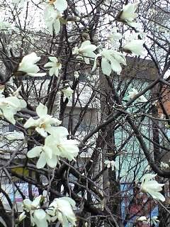 """3/24(月)""""SHOOMY BAND"""" LIVE @西荻窪アケタの店"""