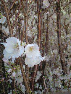 4/8(木)エレクトリック渦 LIVE @荻窪ルースターノースサイド