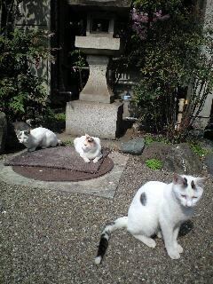 """4/19(土)""""Shoomy Bossa nova Trio """"LIVE@国分寺サンジェルマ8世"""