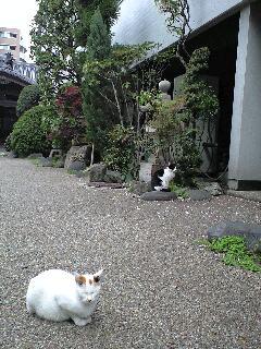 """5/2(金)""""Shoomy Session""""LIVE@西荻窪アケタの店"""